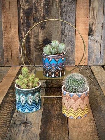 Cactus con vasetto